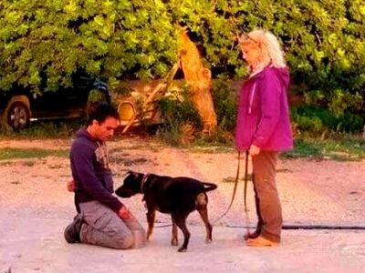 Formadogs - Opiniones del curso de adiestramiento canino online