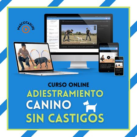 Formadogs - Curso de Adiestramiento Canino Online
